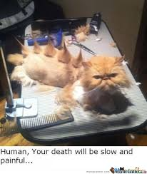 Soon Cat Meme - soon human soon by teeth14 meme center