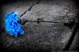 blue carnations blue carnations flower by emilylafleur on deviantart