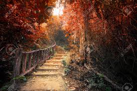 Wall Mural Wallpaper Nature Forest Tree Light Show Photo Fantasy Forest In Autumn Surreal Colors Road Path Way Through