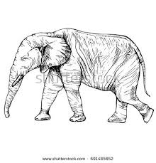 elephant drawing stock images royalty free images u0026 vectors