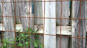 wire mesh trellis rusty for veggies remesh youtube