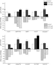 immunotoxicity of β diketone antibiotic mixtures to zebrafish