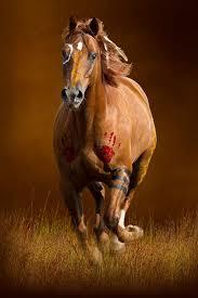 best 25 native american horses ideas on pinterest native