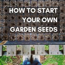 starting your vegetable garden the best way to germinate seeds