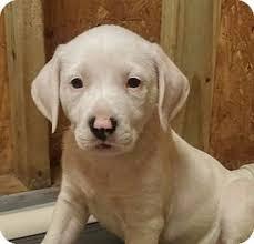 afghan hound adoption florida angel adopted puppy spring hill fl basset hound mix