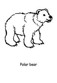 hairy polar bear colouring hairy polar bear colouring