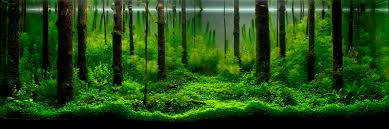 free ideas aquascaping designs beautiful underwater work of art