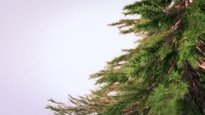 creating photorealistic pine trees in blender youtube