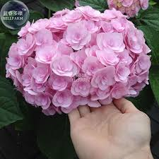 compare prices on spring blooming flowers online shopping buy low