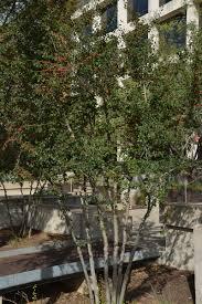 blog central texas gardener
