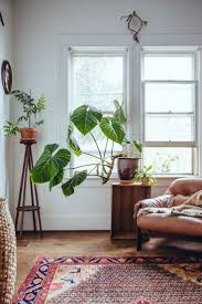 Plants Indoors by The 25 Best Large Indoor Plants Ideas On Pinterest Big Indoor