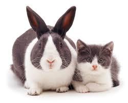 rabbit rabbit snapcat felines and bunnies look exactly the same