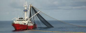 au bureau brest oceanic développement services et conseil dans le domaine de la