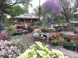 san antonio native plants wilson landscape nursery and florist helotes and san antonio tx