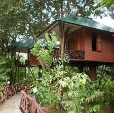 108 best the authentic tree house resort images on