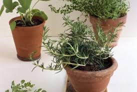 small potted plants how to make a small irrigation system for potted plants home