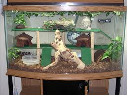 how to make fish tank decorations at home best 25 reptile tanks ideas on pinterest lizard terrarium