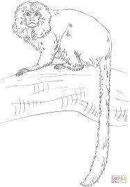 charming coloring pages of monkeys coloring page 4 tamarin