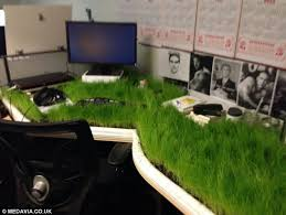 what is a desk return what on turf is growing on my desk engineer returns from three week