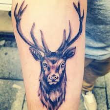 tattoo design and programs free stag deer tattoo meaning