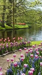 1022 best beautiful flowers images on pinterest flowers flower