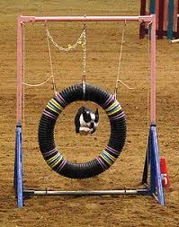 Backyard Agility Course Diy How To Make Your Own Dog Agility Course Petful