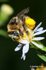 Garden Soil Types - support native bees plant native plants guide to beneficial