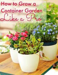 Indoor Garden Containers - 216 best gardening images on pinterest garden ideas gardening