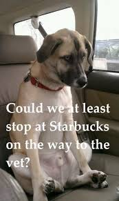 High Dog Meme - 25 dog meme that will definitely brighten your day word porn