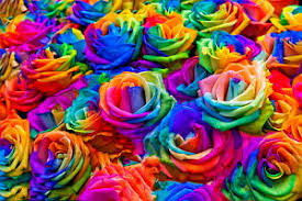 colored roses composition of rainbow colored roses jigsaw puzzles