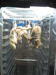 Meat Curing Cabinet Second Curing Chamber Slow And Sew