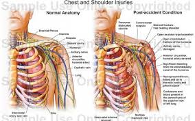 Human Anatomy Torso Diagram Human Anatomy Organs Woman Muscle Bones Male Body Labels Chart
