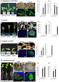 frontiers type 3 secretion system t3ss of bradyrhizobium sp