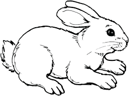 free rabbit coloring pages u2013 corresponsables co