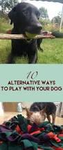 Petmate Indigo Dog House Xl 1115 Best Pet Perfect Images On Pinterest Large Dogs Dog