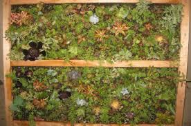 succulent wall garden project arid gardening