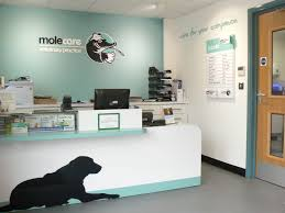 molecare veterinary practice reception area work related vet