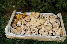 cuisiner pieds de mouton recettes pour pied de mouton chignons saveurs lozériennes