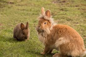 real honest expert rabbit advice best rabbit hutch best