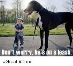 Great Dane Meme - pin by madonna porter on great danes pinterest