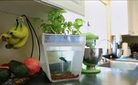 Diy Self Watering Herb Garden Diy Aquaponics 5 Best Self Watering Organic Aquaponic Garden Kits