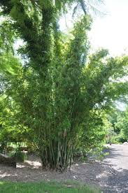native plant nursery terrey hills bamboo land nursery and parklands qld australia wholesale and