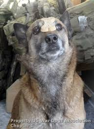108 best operation military care k 9 images on pinterest