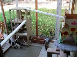 indoor vs outdoor community concern for cats
