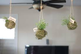 gorgeous hanging indoor planter 106 hanging planters indoor plants