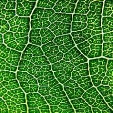 fractal pattern in nature patterns in nature by national geographic trees wood and drawing
