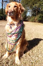 mardi gras dog collars from baton thek9harperlee page 3