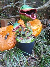 Halloween Props For Sale Plant Series U2013 U201cunearthed U201d Plant 2 Hand Made Carnivorous Man
