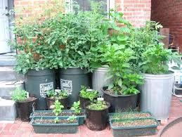 Container Vegetable Gardening Ideas Container Veggie Garden Alexstand Club