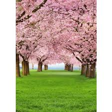 ideal decor cherry trees wall mural free shipping today